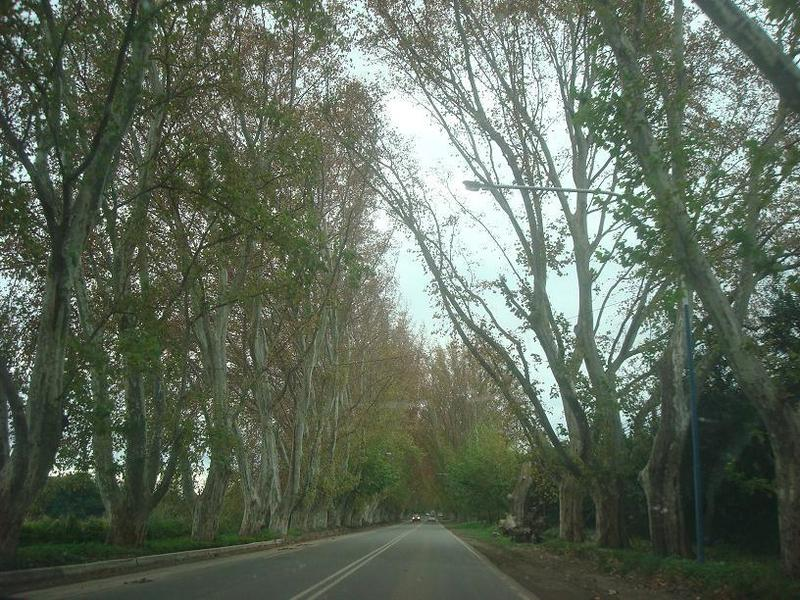 Hermoso arbolado en Colonia Caroya. Nice trees at Colonia Caroya