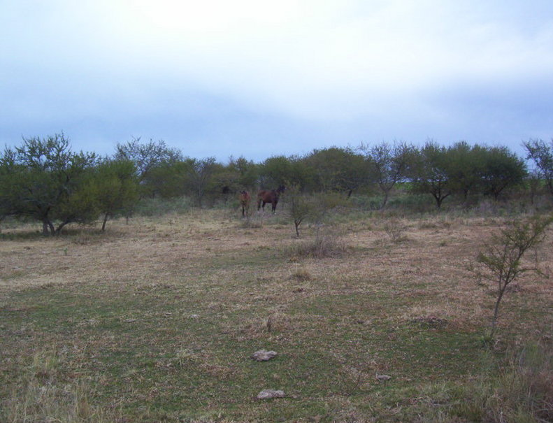 Caballos en el monte ralo. Houses in the bushes