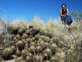 #7: Olga refused to go beyond these giant cacti