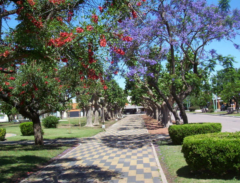 Principal Square at Gral. Viamonte - Ceibo and Jacarandá