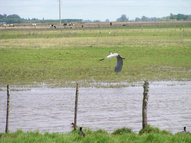 a heron flying along route nr. 188