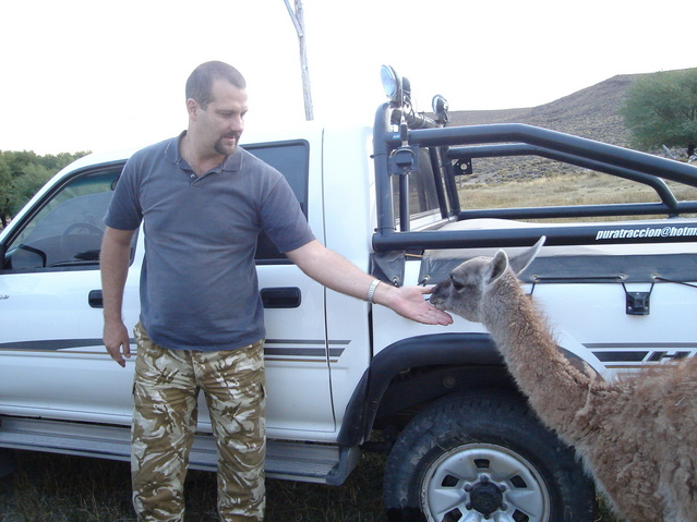 "Guanaco amistoso - ""Guanaco"" friendly"