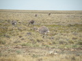 #9: Rheas near the Confluence Point