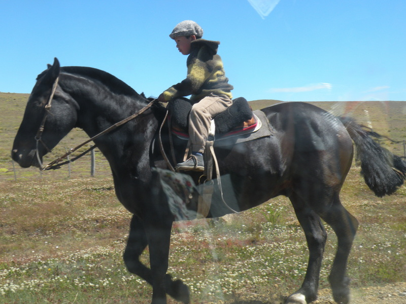 Young Gaucho on his Horse