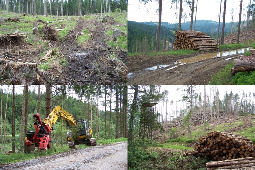 Forestry machine and results of its work