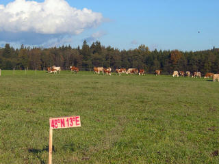 #1: The spot from the west with a grazing cows