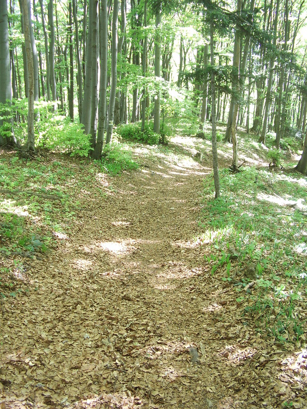 The trail, passing the confluence in a distance of 40m and leads directly to Weissenbach