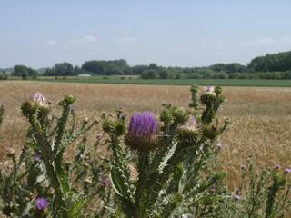 #1: Above a thistle looking at the confluence area (EAST)