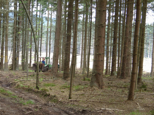 Friendly forest workers clearing windfall damages
