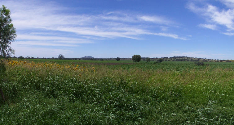 Panorama of the field I had to cross
