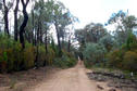 #3: Mt Carl Road which leads to the confluence