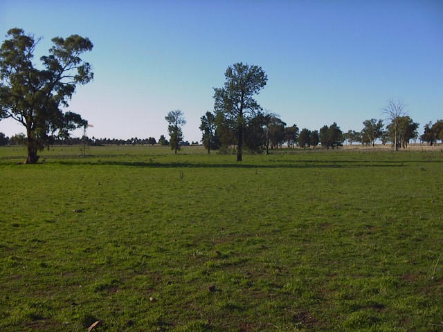 Looking north - a flat plain