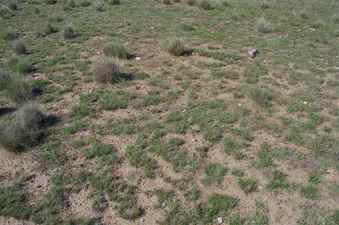 #1: The confluence point lies in thinly-vegetated pasture