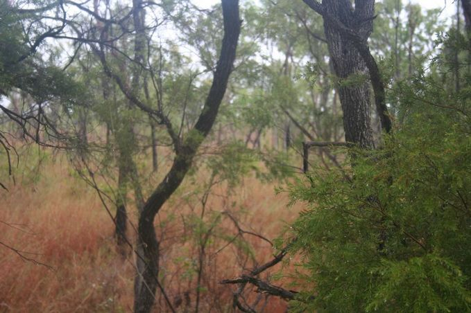 View to the South