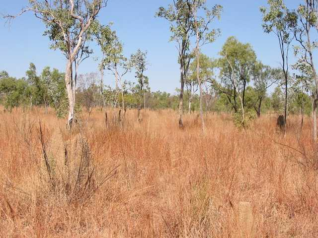 General area - confluence is about a metre to the right of the termite mound in the foreground