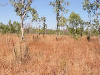 #1: General area - confluence is about a metre to the right of the termite mound in the foreground