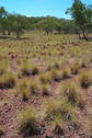 #3: Spinifex.