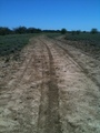 #6: Dirt track between the road and the confluence