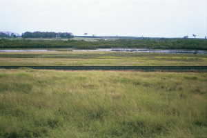 #1: Looking towards the confluence (400m away; probably within the swampy area)