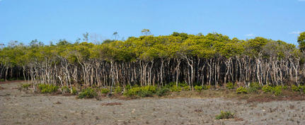 #1: Mangroves at the confluence.
