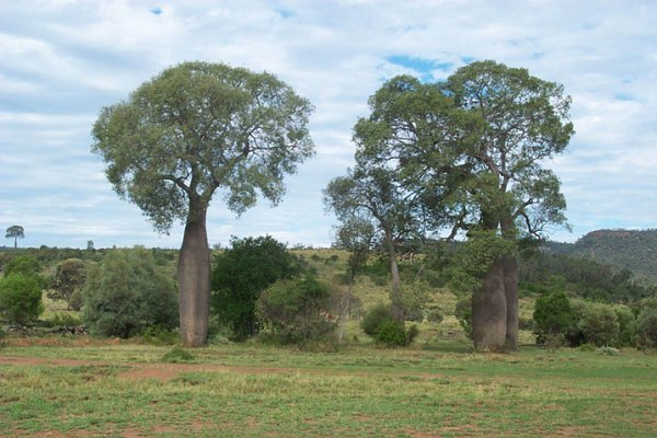 Bottle trees on the property