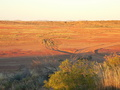 #8: Looking East from the top of a dune to the East of the Confluence