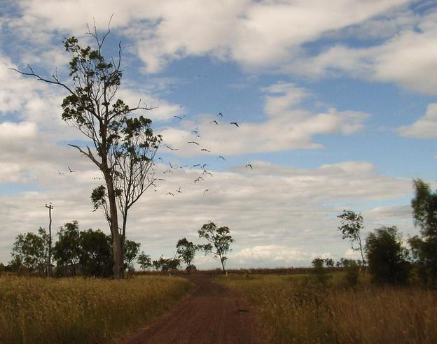 The flock of cockatiels and the Warregi Hwy in the background
