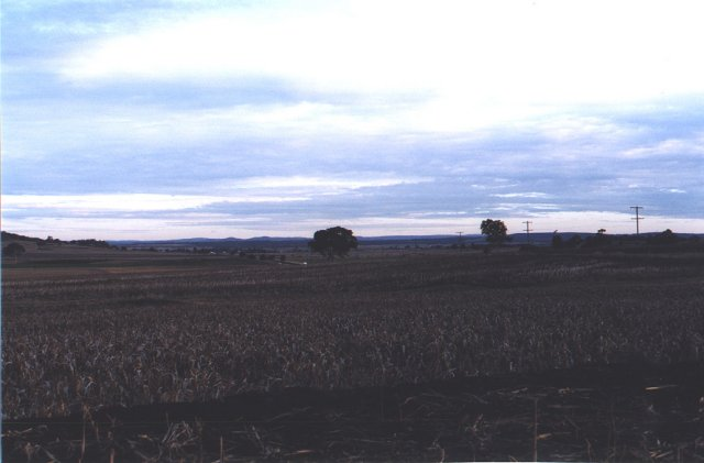 Looking south, across the sorghum, from the confluence.