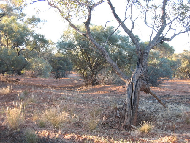 Arckaringa Creek floodplain