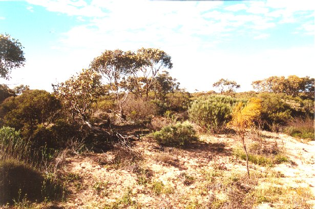 Looking east, native vegetation.