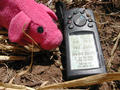 #7: Piggy @ confluence (Geocaching Team Mascot)