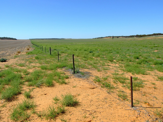 The Fenceline showing the difference between the 2 Paddocks