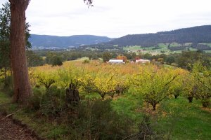 #1: Apple orchards of the Huon Valley from a point about 400 metres before the confluence