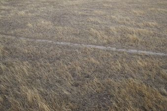 #1: The confluence point lies in a pasture.  (The straight line appears to be a dirt bike track.)