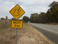 #10: Caution Koala Bear