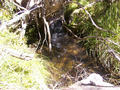 #6: A small mountain stream