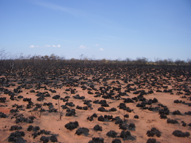 Burnt Spinifex at the Confluence