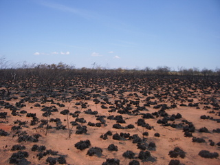 #1: Burnt Spinifex at the Confluence