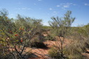 #4: Standing on confluence - view to the east along dune