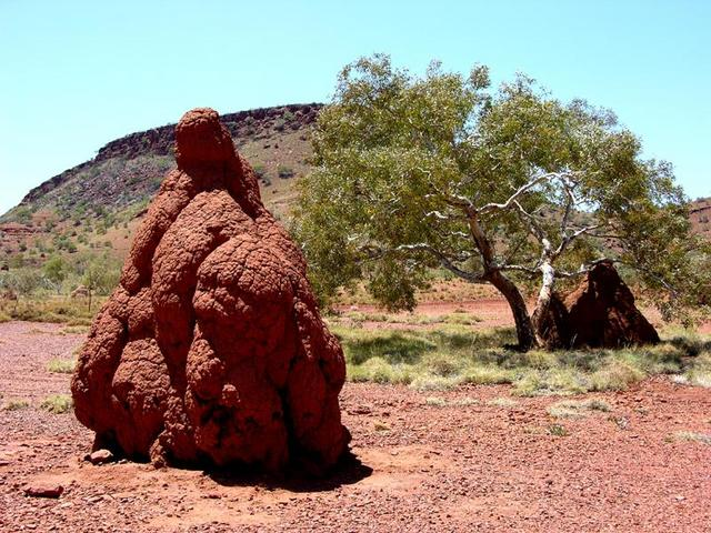 One of the many huge ant hills in the Hammersley Gorge area.