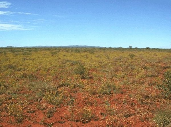 Flat and red. Hamersley Ranges in the distance.