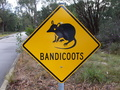 #9: Would Have Loved To Have Seen A Bandicoot..