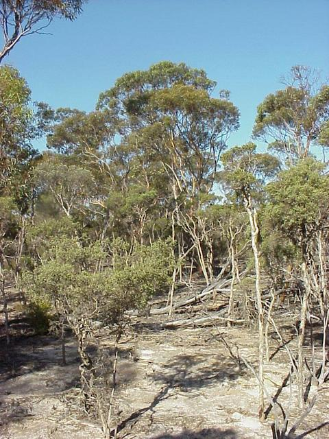 Typical vegetation