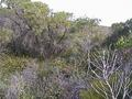 #4: Facing south - Note dense scrub