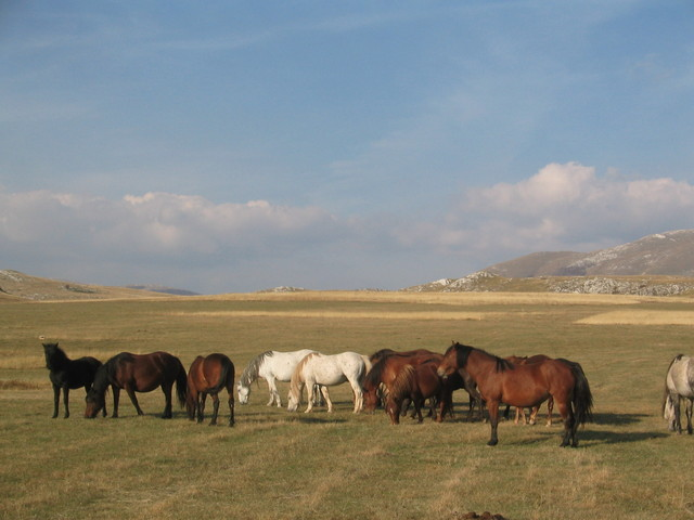 Horses on the high plateau