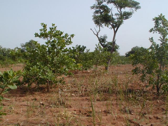 South, back towards the truck, through the fruit groves.
