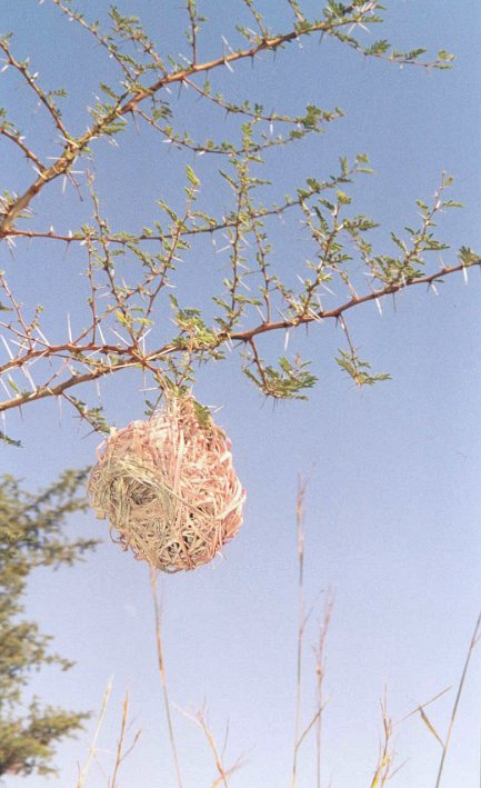 Birdnest above the Confluence