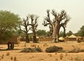 #10: Women preparing food close to baobab trees