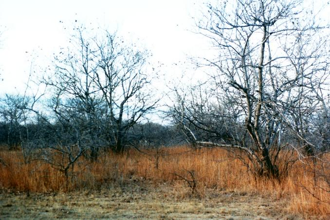 Facing north through the 'caatinga' (semi-arid deciduos vegetation)