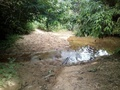 #4: Pequeno riacho antes de chegar às bordas da floresta - small stream before arriving at the jungle border